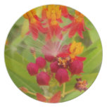Hakuna Matata comely green red yellow Flower Buds. Plates