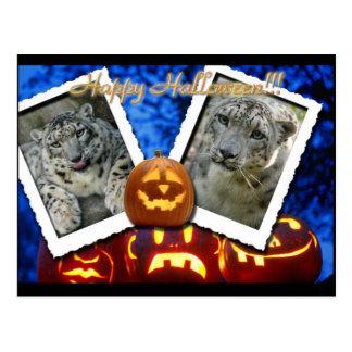 hal-snow-leopard-3 post cards