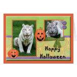 hal-white-tiger-1 felicitación