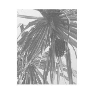 HALA - Pandanus odoratissimus Gallery Wrap