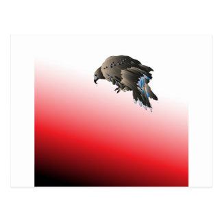 Halcón agresivo despredador del pájaro negro postales
