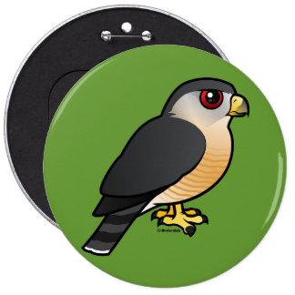 halcón Agudo-shinned Pin