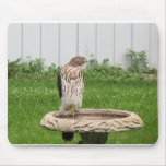 halcón alfombrilla de ratones