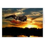 Halcón atado rojo en la puesta del sol tarjeton