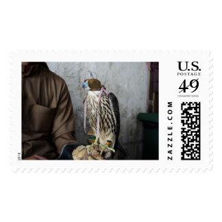 Halcón de la cetrería timbres postales