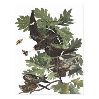 Halcón de la noche de Audubon Tarjetas Postales