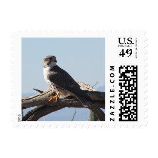 Halcón de la pradera timbres postales
