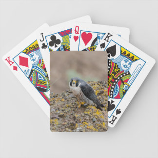 Halcón de peregrino baraja de cartas