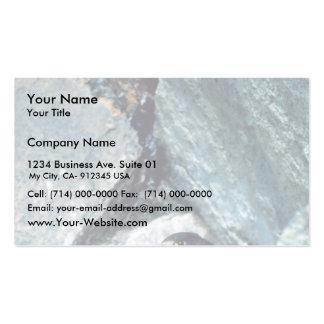 Halcón de peregrino con los polluelos tarjetas personales