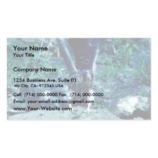 Halcón de peregrino joven tarjetas personales