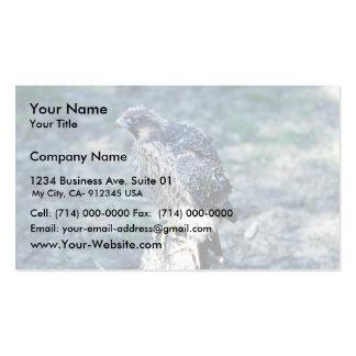 Halcón de peregrino joven plantillas de tarjeta de negocio