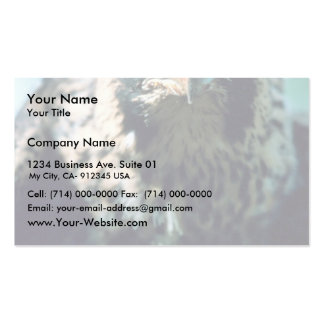 Halcón de peregrino, juvenil tarjeta de visita