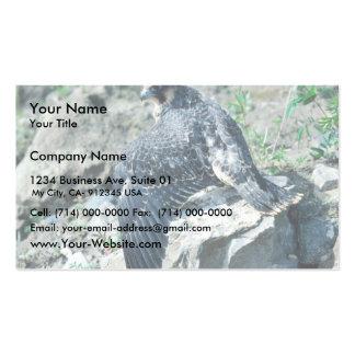 Halcón de peregrino, juvenil tarjetas de visita