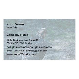 Halcón de peregrino, juvenil plantillas de tarjetas personales