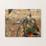 halcón de peregrino, pájaro del rompecabezas de la