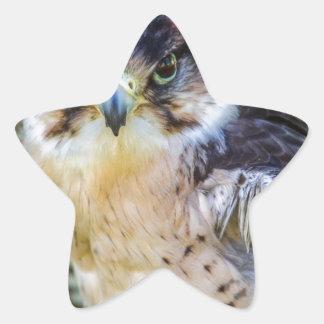 Halcón de peregrino pegatina en forma de estrella