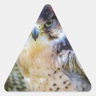 Halcón de peregrino pegatina triangular