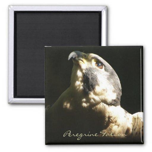 Halcón de peregrino - retrato de la foto de la fau imán para frigorífico