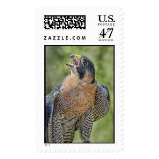 Halcón de peregrino sellos postales