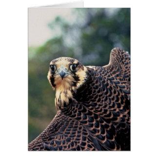 Halcón de peregrino tarjetón
