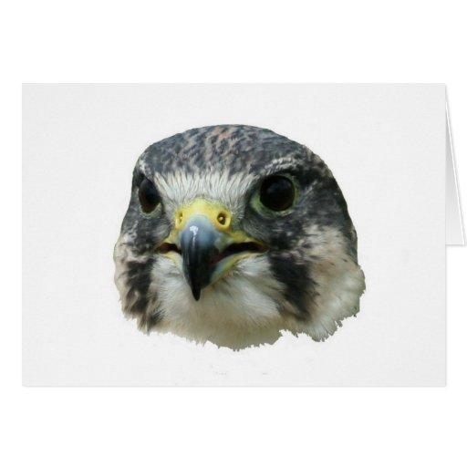 Halcón de peregrino tarjeta de felicitación