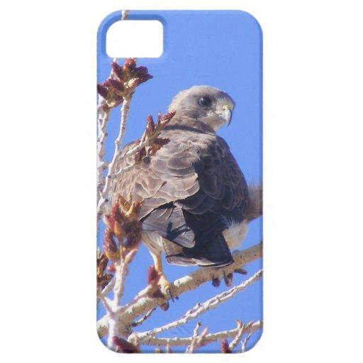 Halcón de Swainsons iPhone 5 Protector