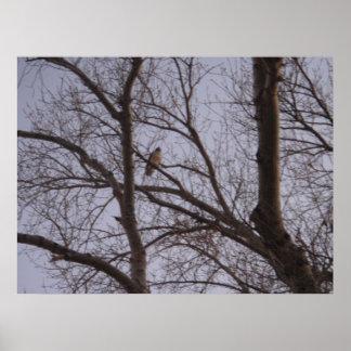 Halcón en árbol deshojado póster