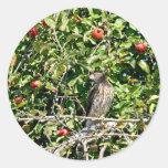Halcón en foto del manzano etiquetas redondas