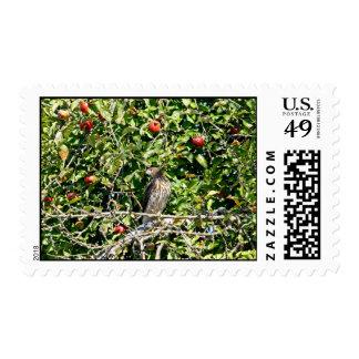 Halcón en foto del manzano sello