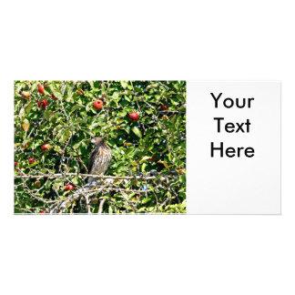 Halcón en foto del manzano tarjeta personal