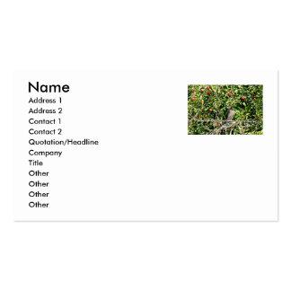 Halcón en foto del manzano tarjetas de visita