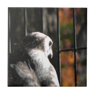 Halcón en un refugio de aves azulejo cuadrado pequeño