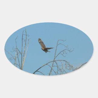 Halcón en vuelo calcomania óval