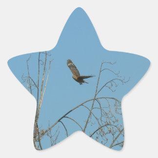 Halcón en vuelo calcomanias forma de estrella