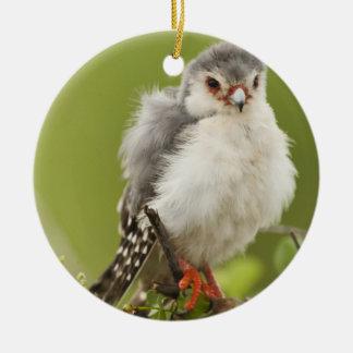 Halcón enano preening en un árbol adorno navideño redondo de cerámica