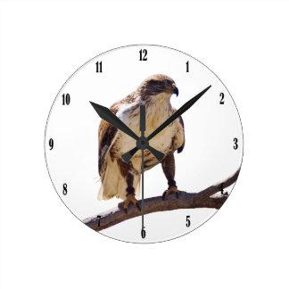 Halcón ferruginoso relojes