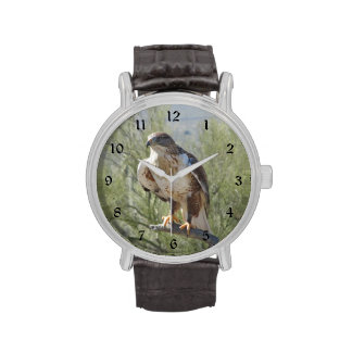 Halcón ferruginoso reloj de mano