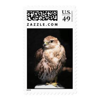 Halcón II Franqueo del halcón de Saker