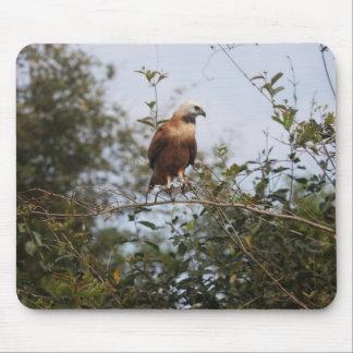 halcón Negro-agarrado Tapete De Ratón