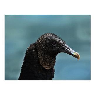 Halcón negro postales