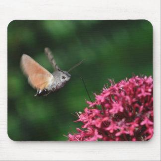 Halcón-polilla del colibrí que asoma mousepads