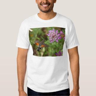Halcón-polilla del colibrí (stellatarum de playera
