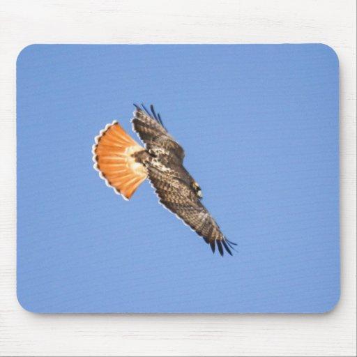 halcón Rojo-atado Alfombrilla De Ratón