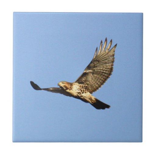 halcón Rojo-atado Azulejos