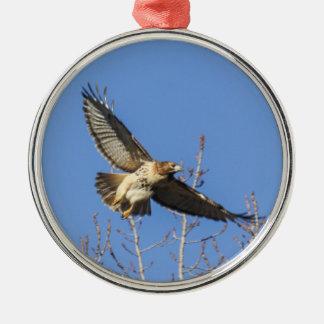 halcón Rojo-atado Ornamento De Navidad