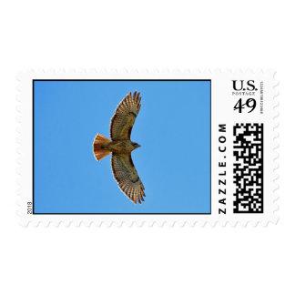 Halcón Rojo-Atado en vuelo Estampilla
