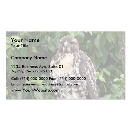 Halcón rojo-atado joven tarjeta de visita