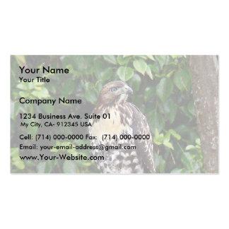 Halcón rojo-atado joven tarjetas de visita