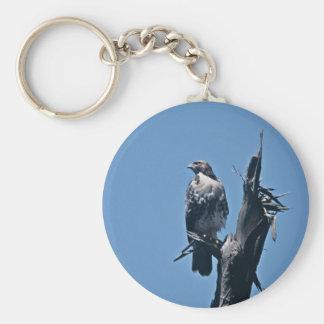 halcón Rojo-atado Llavero