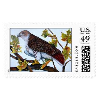 halcón rojo-atado, sellos